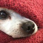 Emergenza freddo a Milano: per i clochard anche un dormitorio aperto ai cani