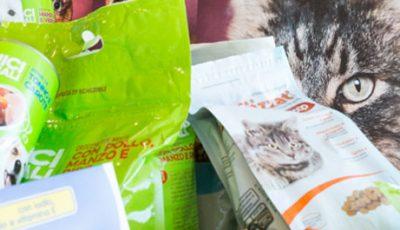 Pet Day: giugno 2017