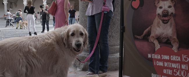 proroga human dog 2017