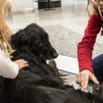 Pet therapy_aeroporti Milano_estate 2017