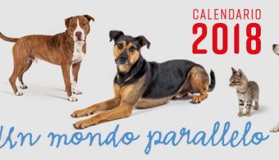 Manuela Michelazzi: la sua esperienza nel Calendario