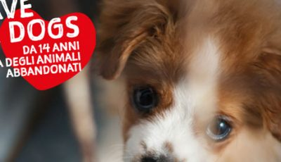 Save the Dogs e Alimenta l'Amore al Gate