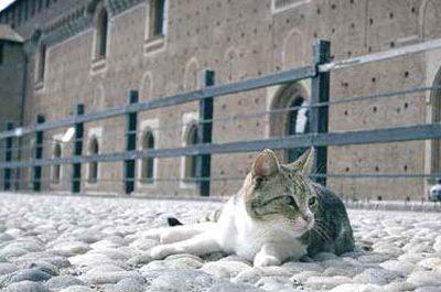 news_consumatori giugno-luglio colonia felina