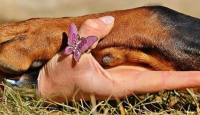 Appuntamento a Desio con Rebel Dog - Alimenta l'Amore