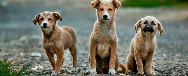 La protezione civile per animali_ Consumatori _ gennaio 2017