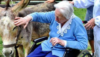 gli asini curano gli anziani del trivulzio - Credits foto Fotogramma