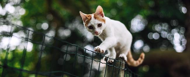 Aiutiamo il Gattile Dimensione Animale di Rho
