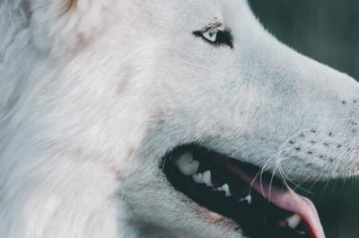 Presentato il corto Angelo – Life of a Street Dog