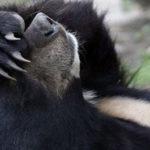 Stop alle sevizie sugli orsi - Rivista Consumatori