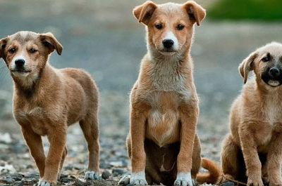 Il bando del Comune di Milano a tutela degli animali