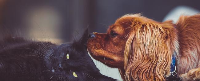 Essere umani e animali: insieme per tutta la vita e oltre