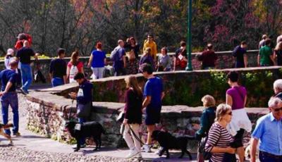 Corridog Bergamo: una giornata con amici a quattro zampe