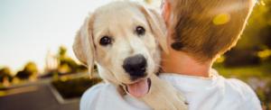 Comune di Milano: nuovo regolamento a favore degli animali