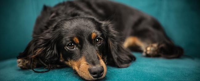 Il 26 agosto è la Giornata Internazionale del Cane