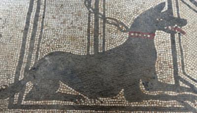 Umani e animali: notizie dal mondo antico - Rivista Consumatori