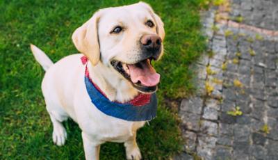 Puppy Walker allevare un cane guida - Rivista Consumatori