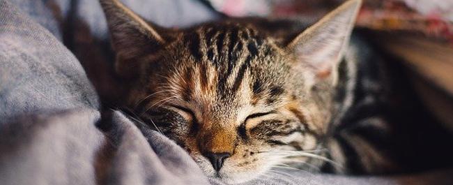 In Lombardia obbligo microchip per i nostri gatti