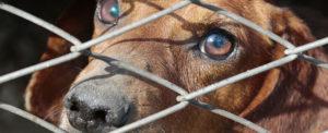 Coronavirus in Cina divieto di mangiare cani e gatti