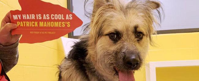 Campione del Super Bowl sostiene i cani del rifugio