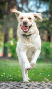 Jack, il cane sentinella - Rivista Consumatori