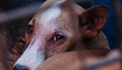 L'inchiesta su Marc Ching da animalista ad aguzzino