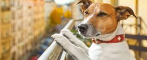Vita di condominio le regole da seguire con un pet