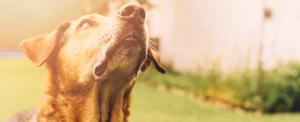 Anche Varese avrà un cimitero per gli animali d'affezione