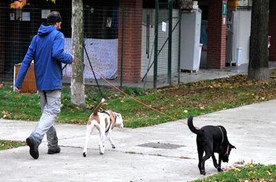 A Milano al via i corsi per ottenere il Patentino Cane Speciale