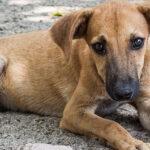 In Kosovo i militari italiani a difesa dei cani randagi
