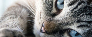 Uomini e animali questione di chimica - Rivista Consumatori