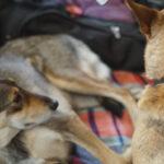 Aprire le strutture d'accoglienza ai clochard con cani