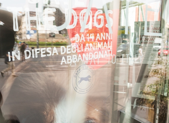 Save the Dogs and other Animals al Gate – 05 luglio 2016